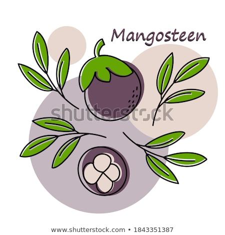 Stockfoto: Paars · mangisboom · exotisch · sappig · vruchten · vector