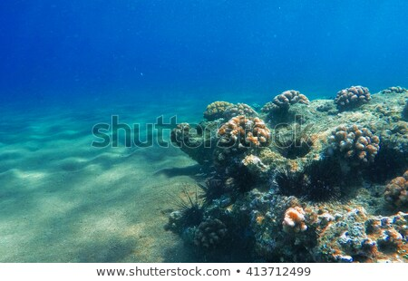 Underwater scene with coral reef and sea urchin Stock photo © colematt