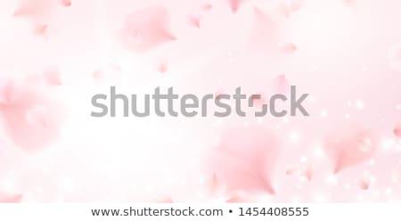Witte bloem vector hart wind roze witte Stockfoto © LisaShu