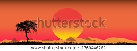 Silhueta cena rinoceronte campo ilustração céu Foto stock © colematt