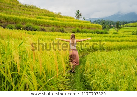 Fiatal nő utazó gyönyörű rizs híres Bali Stock fotó © galitskaya