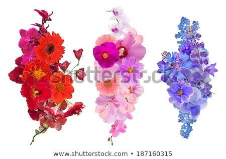 青 · 花 · 巨大な · 青い花 · 異なる · 抽象的な - ストックフォト © barbaraneveu