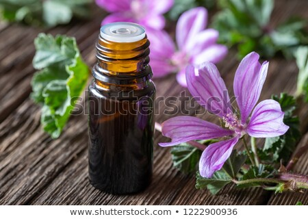a bottle of mallow essential oil with fresh malva sylvestris flowers stock photo © madeleine_steinbach