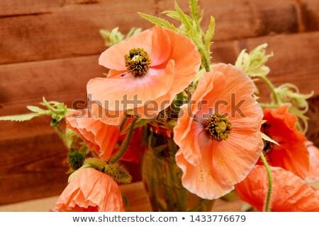 Pálido rosa jardim vaso Foto stock © sarahdoow