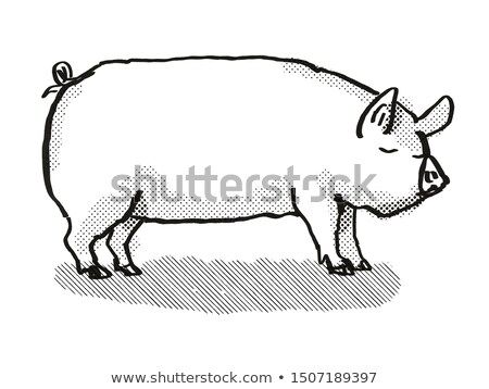 средний белый свинья Cartoon ретро Сток-фото © patrimonio