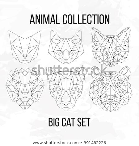 Rajzolt állatok fej címer szett gyűjtemény rajzfilmfigura Stock fotó © patrimonio
