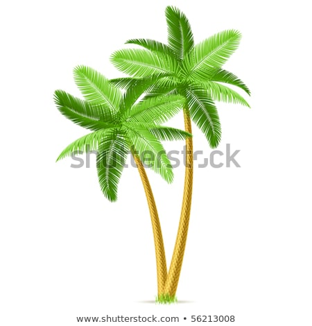 Palm Leaves Tree High Trunk Color Vector Stock photo © pikepicture