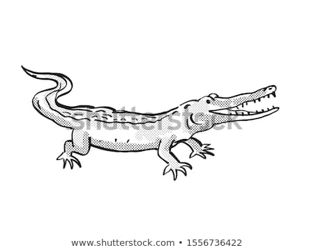 West African Slender Snouted Crocodile Endangered Wildlife Cartoon Drawing Stock photo © patrimonio