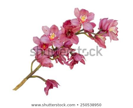 rózsaszín · virágzó · orchidea · gyönyörű · üvegház · virág - stock fotó © smithore