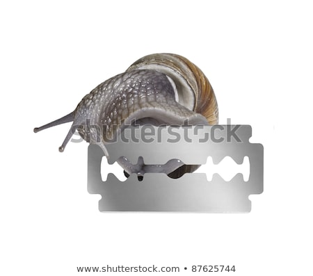 Szőlőtőke csiga borotva penge stúdió fotózás Stock fotó © prill