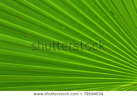 Green palm leaf colse-up Stock photo © jakgree_inkliang