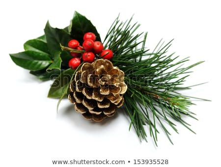 pine cone and christmas decoration Stock photo © M-studio