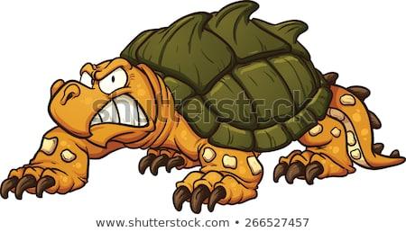 сердиться черепахи сокрытие оболочки изолированный белый Сток-фото © vadimmmus