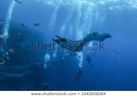 Mély kék óceán gyönyörű úszik hal Stock fotó © phakimata
