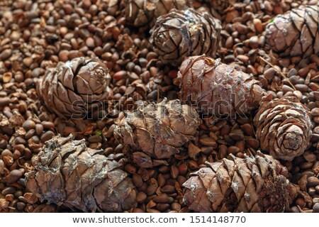 A few pine cones Stock photo © michaklootwijk