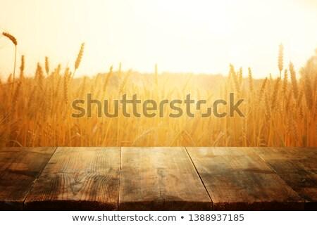 小麦 木材 耳 黄色 シード 誰も ストックフォト © kornienko