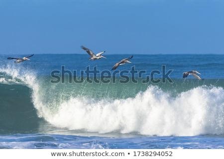 ブラウン フィート 翼 立って 狩猟 ほ乳類 ストックフォト © alex_grichenko