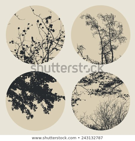 Black Alderand and Ash trees Stock photo © vavlt