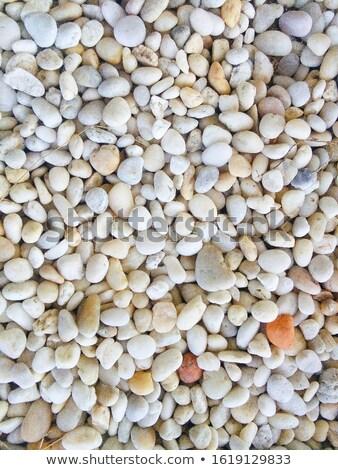 witte · stenen · onderwater · foto · bos · ondiep - stockfoto © Stootsy