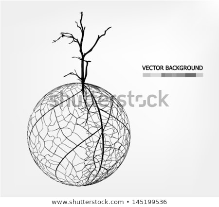 Tree Root Ball Abstract Stock photo © searagen