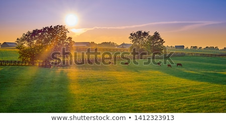 grazing horses on the farm ranch stock photo © stevanovicigor