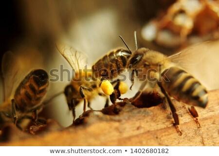 пчела полный макроса пчелиного меда цветок монохромный Сток-фото © sarahdoow