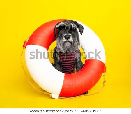 miniature sailor stock photo © nelsonart