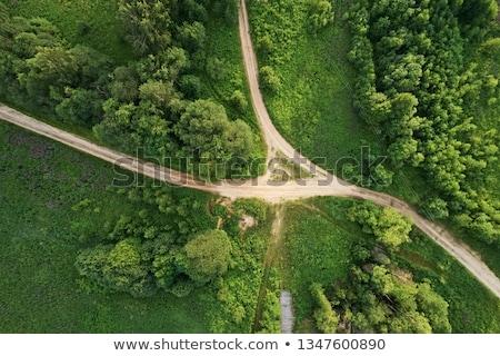 Estrada de terra verão verde vegetação flores floresta Foto stock © olandsfokus