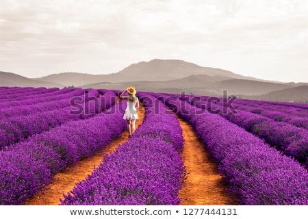 Campo de lavanda tasmania Australia amplio campo púrpura Foto stock © roboriginal