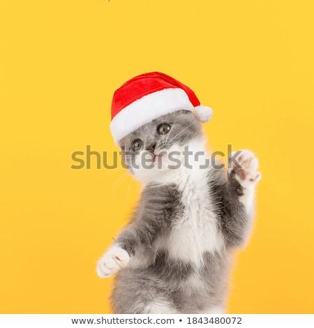 pets christmas greeting postcard stock photo © marimorena