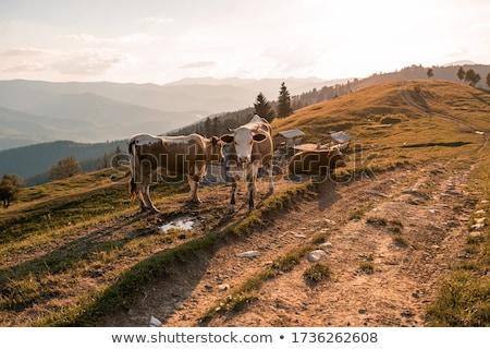 Village of shepherds in the mountains  Stock photo © Kotenko