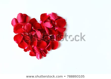 Rose · Red · pétale · forme · de · coeur · blanche · rouge · peu - photo stock © dolgachov