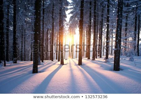 зима лес закат снега солнце Сток-фото © Steffus