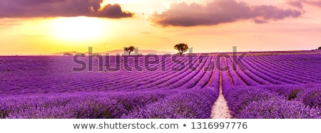 agricultural springtime scenery Stock photo © prill