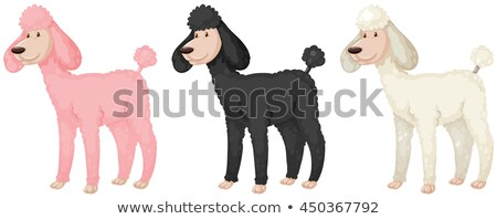 Puddle dogs with different color fur Stock photo © bluering