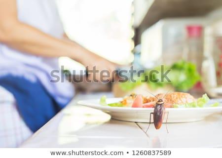 cockroach dining stock photo © lienkie