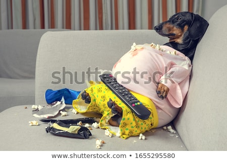 a couch potato stock photo © bluering