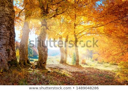 осень · лужа · сцена · пейзаж · грязи - Сток-фото © mady70