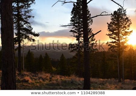 nature mountains landscape sunset or dawn sun over the mountains rocky mountains and pine forest stock photo © leo_edition