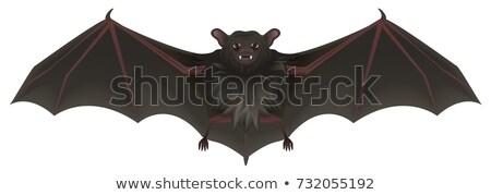 Bat vampier scherp tanden vleugels halloween Stockfoto © orensila