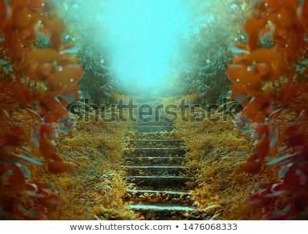 темно · подземных · лестница · вверх · вход · мои - Сток-фото © novic