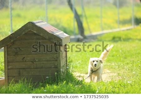 Verde cão tigela osso desenho Foto stock © hittoon