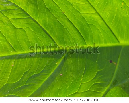 Macro photo of veined green leaf pattern. Natural beautiful background for layout Stock photo © artjazz