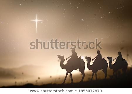 camello · icono · silueta · diseno · símbolo - foto stock © bluering