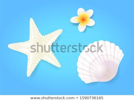 Marisco starfish pálido exótico flor isolado Foto stock © robuart