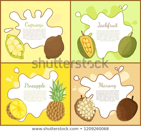 Cupuacu and Jackfruit Posters Vector Illustration Stock photo © robuart