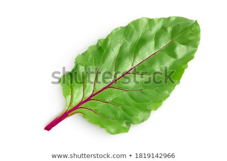 Closeup view of chard with beetroots isolated on white Stock photo © dla4