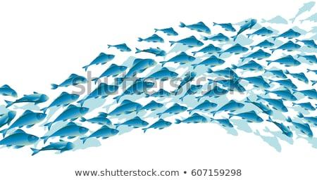 Set of underwater fish Stock photo © bluering
