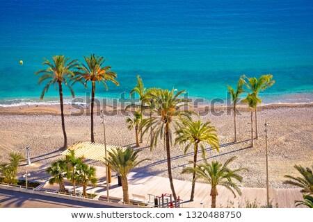 Photo stock: Palm · sable · plage · français · ville · soleil