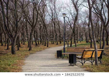 Autumn Season Empty Bench, Red Color Trees, Lamp Stock photo © robuart